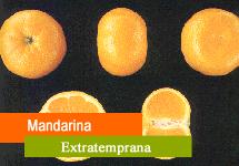 Mandarina extratemprana