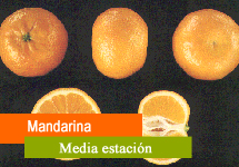 Mandarina de media estación