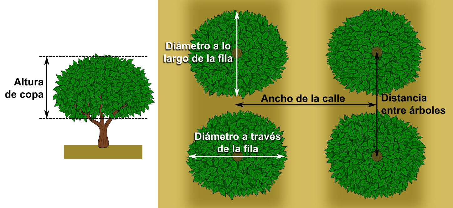 Medidas árbol