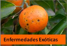 enfermedades exóticas
