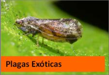plagas exóticas1
