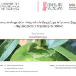 Tesis doctoral aporta nuevos datos para la gestión integrada de Pezothrips kellyanus en cítricos