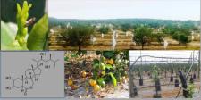 Seminario IVIA:  Living with HLB. La nueva realidad de la citricultura de Florida